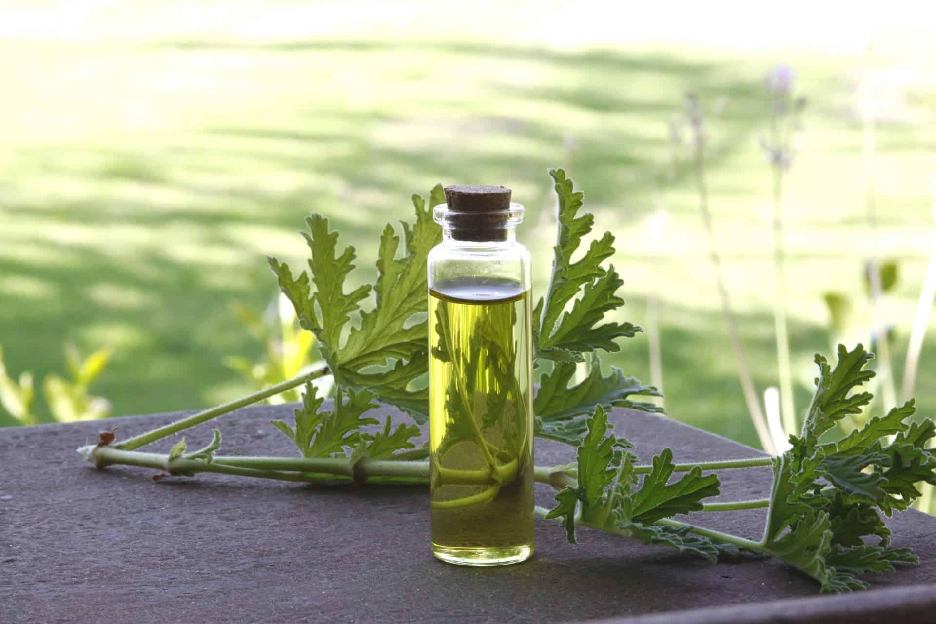 'Godfather' of North Coast olive oil goes international